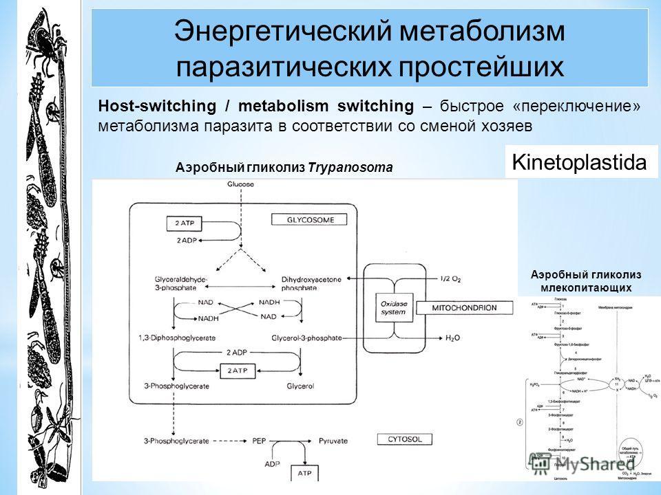 Энергетический метаболизм паразитических простейших Host-switching / metabolism switching – быстрое «переключение» метаболизма паразита в соответствии со сменой хозяев Аэробный гликолиз Trypanosoma Аэробный гликолиз млекопитающих Kinetoplastida