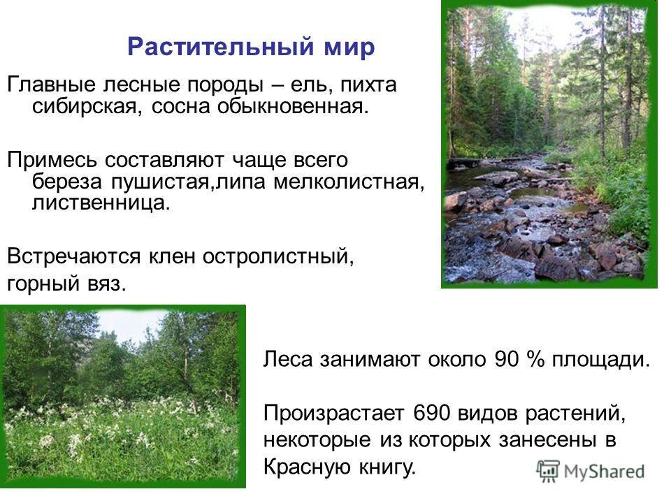 Растительный мир Главные лесные породы – ель, пихта сибирская, сосна обыкновенная. Примесь составляют чаще всего береза пушистая,липа мелколистная, лиственница. Встречаются клен остролистный, горный вяз. Леса занимают около 90 % площади. Произрастает
