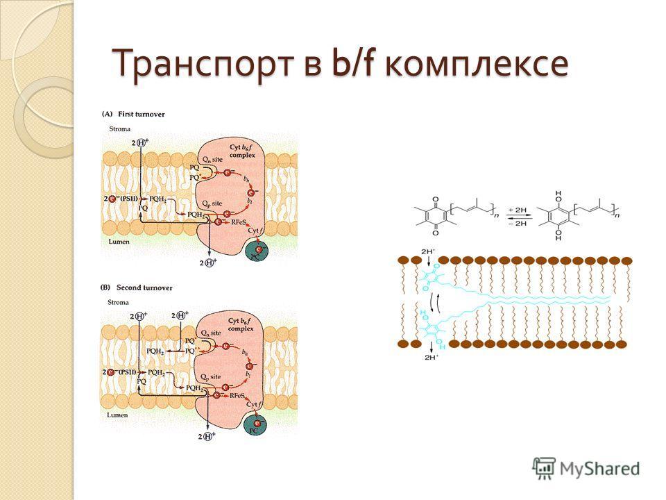 Транспорт в b/f комплексе