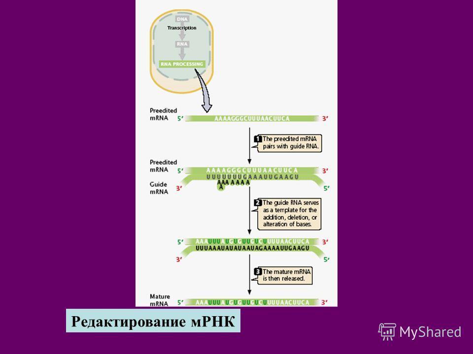Редактирование мРНК