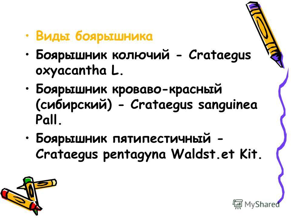 Виды боярышника Боярышник колючий - Crataegus oxyacantha L. Боярышник кроваво-красный (сибирский) - Crataegus sanguinea Pall. Боярышник пятипестичный - Crataegus pentagyna Waldst.et Kit.