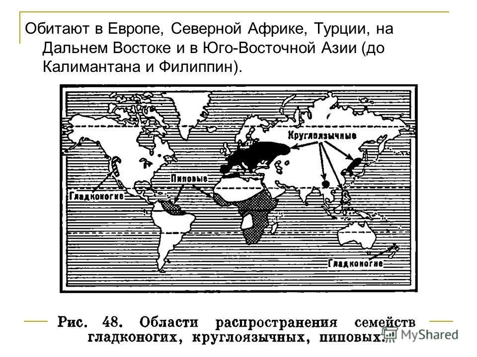 Обитают в Европе, Северной Африке, Турции, на Дальнем Востоке и в Юго-Восточной Азии (до Калимантана и Филиппин).