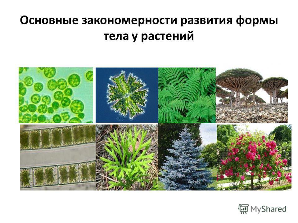 Основные закономерности развития формы тела у растений