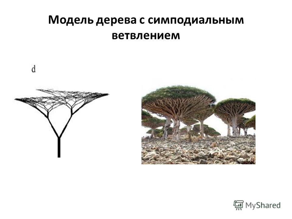 Модель дерева с симподиальным ветвлением