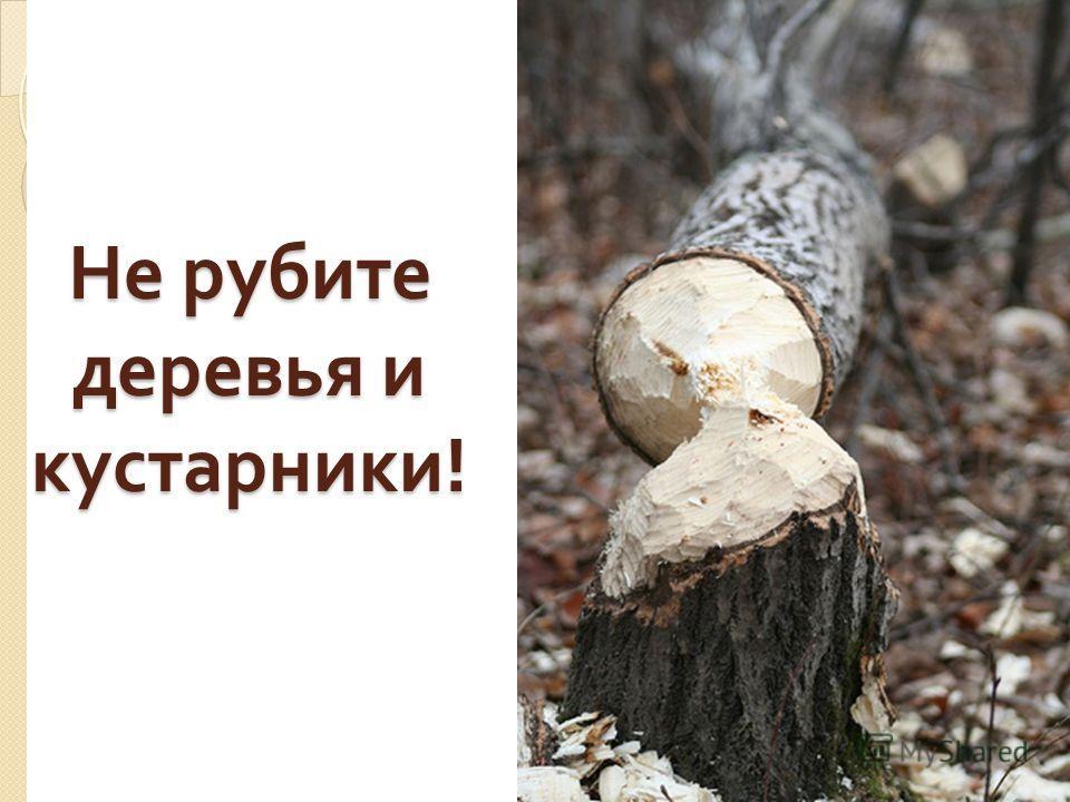 Не рубите деревья и кустарники !