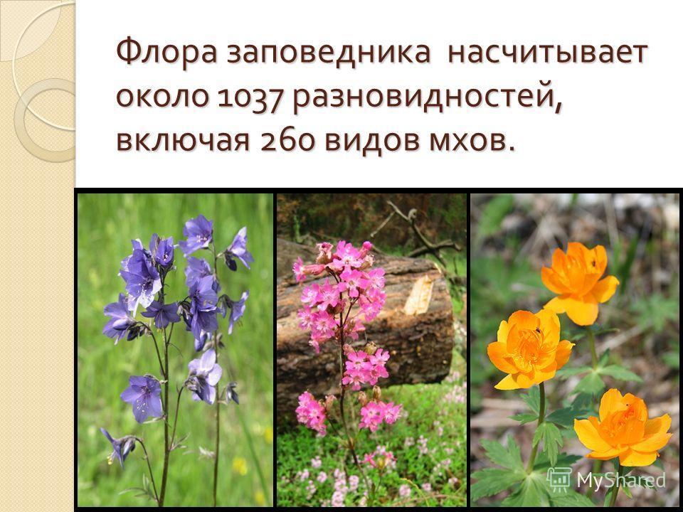 Флора заповедника насчитывает около 1037 разновидностей, включая 260 видов мхов.