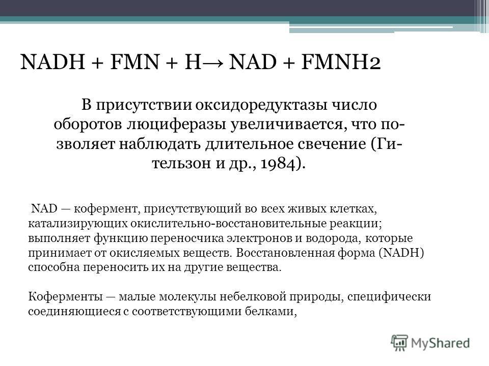NADH + FMN + H NAD + FMNH2 В присутствии оксидоредуктазы число оборотов люциферазы увеличивается, что по- зволяет наблюдать длительное свечение (Ги- тельзон и др., 1984). NAD кофермент, присутствующий во всех живых клетках, катализирующих окислительн