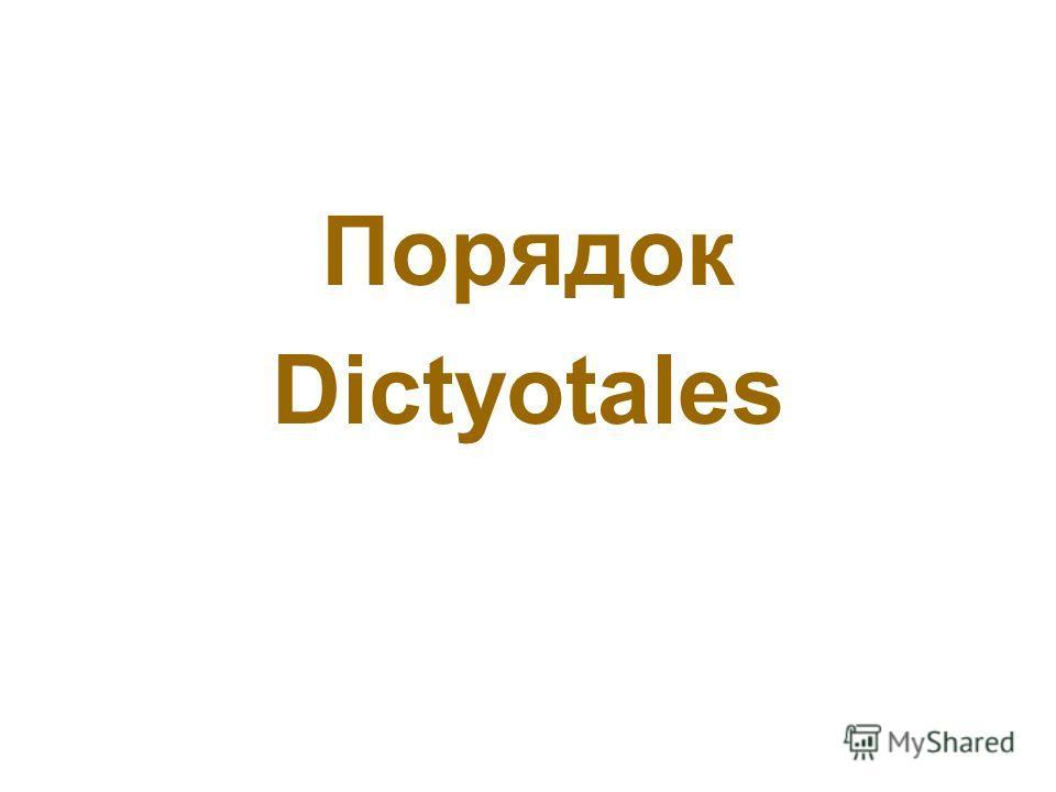 Порядок Dictyotales