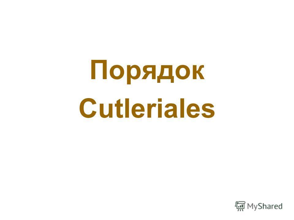 Порядок Cutleriales
