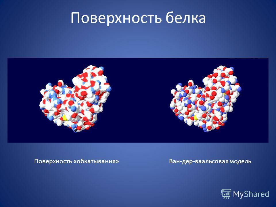 Поверхность белка Поверхность «обкатывания»Ван-дер-ваальсовая модель