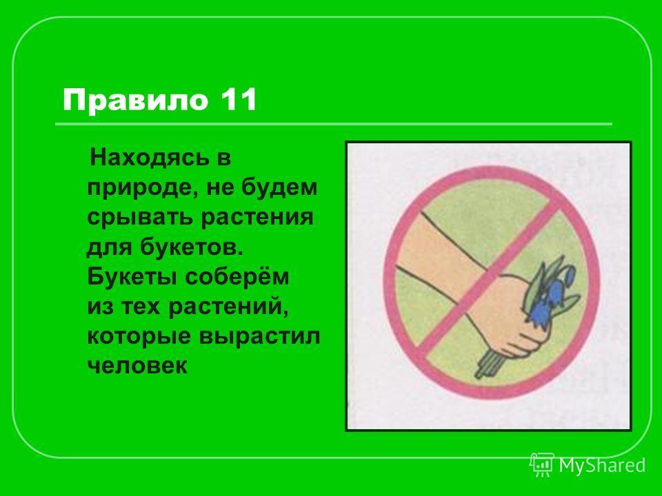 Правило 11 Находясь в природе, не будем срывать растения для букетов. Букеты соберём из тех растений, которые вырастил человек
