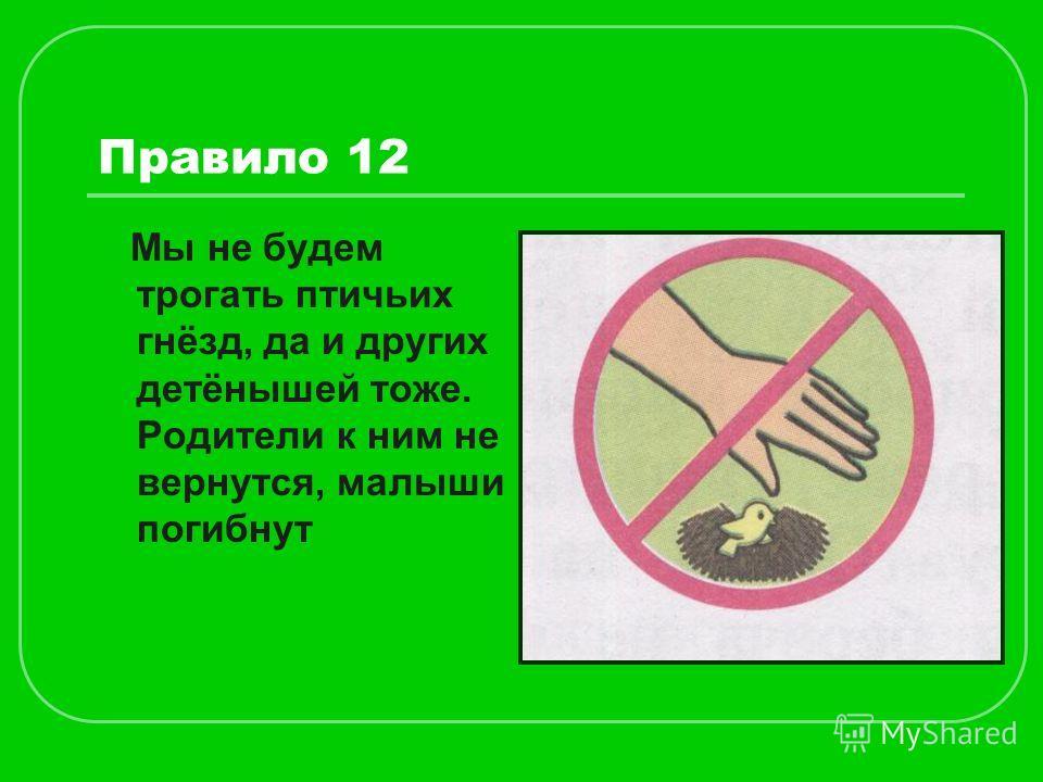 Правило 12 Мы не будем трогать птичьих гнёзд, да и других детёнышей тоже. Родители к ним не вернутся, малыши погибнут