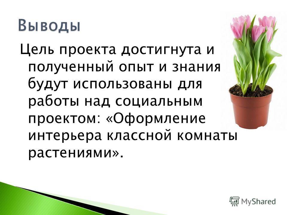 Цель проекта достигнута и полученный опыт и знания будут использованы для работы над социальным проектом: «Оформление интерьера классной комнаты растениями».