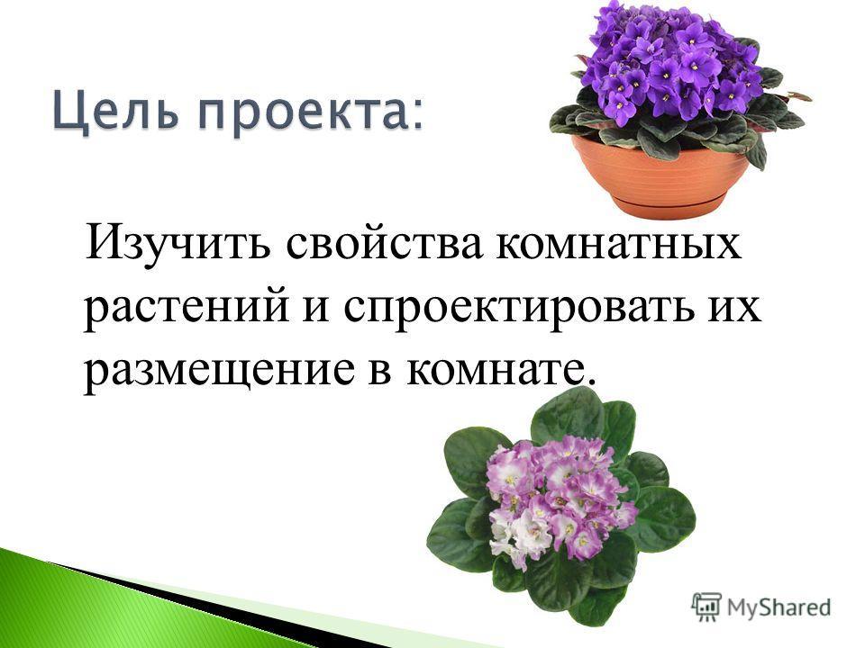 Изучить свойства комнатных растений и спроектировать их размещение в комнате.