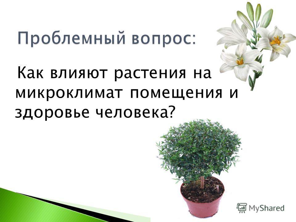 Как влияют растения на микроклимат помещения и здоровье человека?
