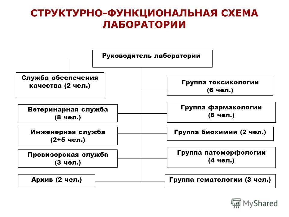 Группа фармакологии (6 чел.