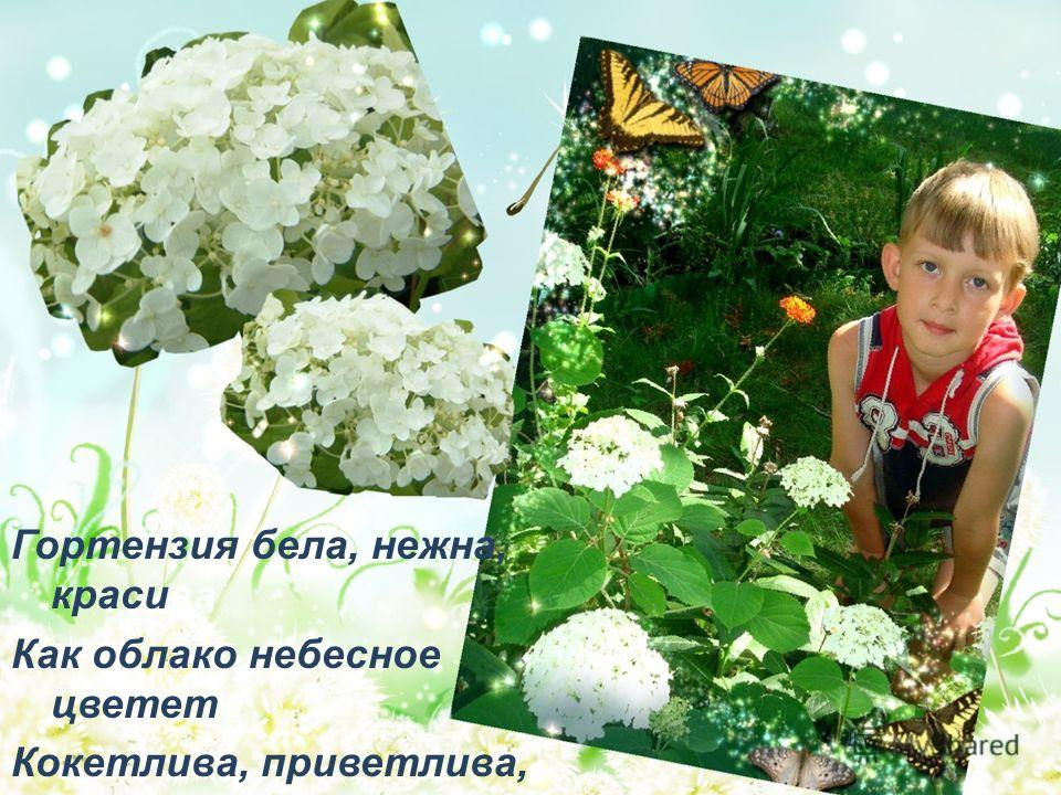 Гортензия бела, нежна, красива Как облако небесное цветет Кокетлива, приветлива, игрива, При взгляде на нее душа поет.