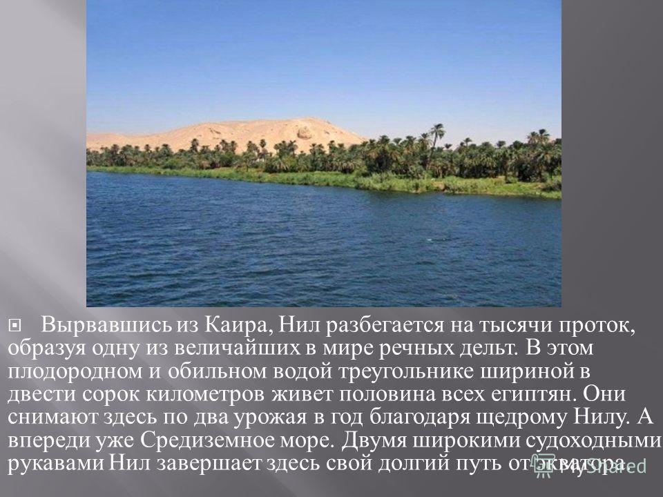 Вырвавшись из Каира, Нил разбегается на тысячи проток, образуя одну из величайших в мире речных дельт. В этом плодо  родном и обильном водой треугольнике шириной в двести сорок кило  метров живет половина всех египтян. Они снимают здесь по два урож