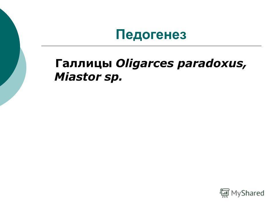 Педогенез Галлицы Oligarces paradoxus, Miastor sp.