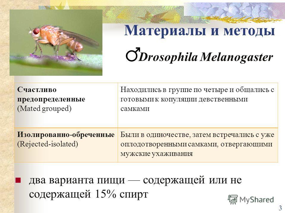 Drosophila Mеlanogaster Счастливо предопределенные (Mated grouped) Находились в группе по четыре и общались с готовыми к копуляции девственными самками Изолированно-обреченные (Rejected-isolated) Были в одиночестве, затем встречались с уже оплодотвор