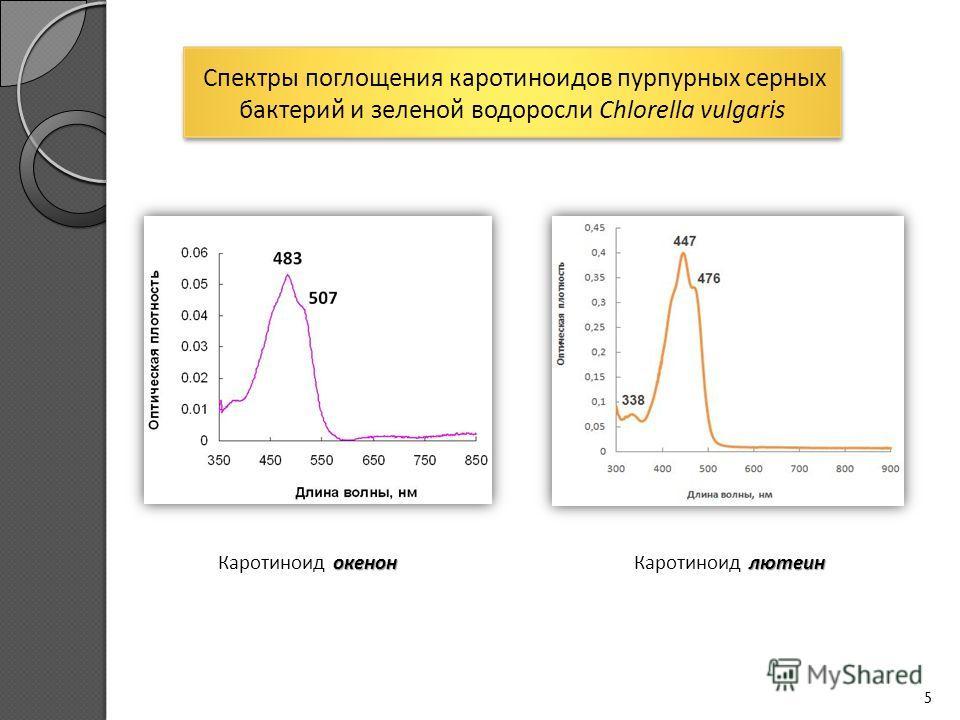 5 окенон Каротиноид окенон лютеин Каротиноид лютеин Спектры поглощения каротиноидов пурпурных серных бактерий и зеленой водоросли Chlorella vulgaris