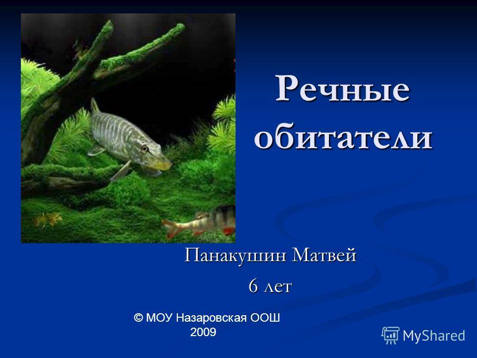 Речные обитатели Панакушин Матвей 6 лет © МОУ Назаровская ООШ 2009
