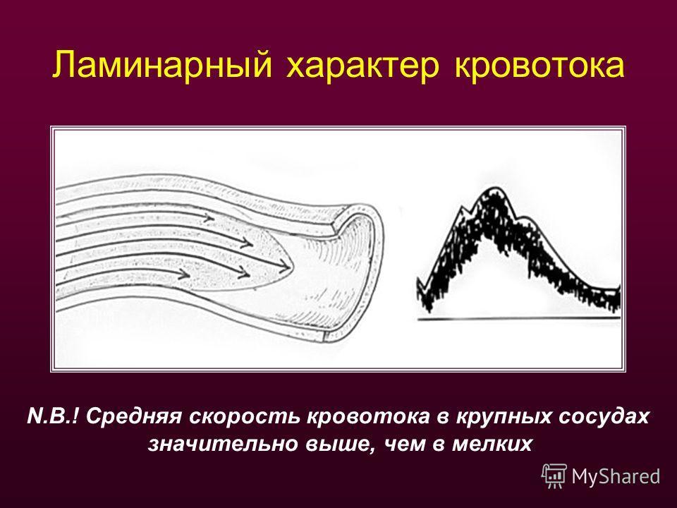 Ламинарный характер кровотока N.B.! Средняя скорость кровотока в крупных сосудах значительно выше, чем в мелких