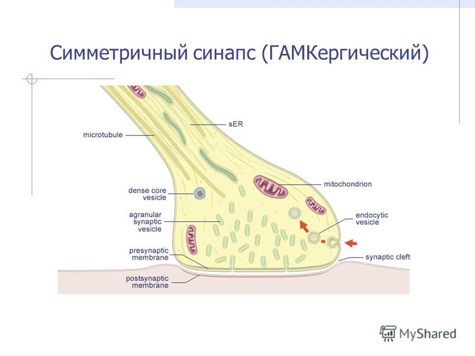 Симметричный синапс (ГАМКергический)