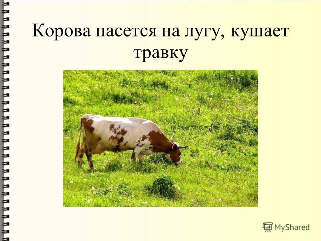 Корова пасется на лугу, кушает травку