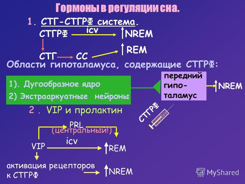 передний гипо- таламус Гормоны в регуляции сна. 1. СТГ-СТГРФ система. СТГРФ icv NREM REM CTГ CC Области гипоталамуса, содержащие СТГРФ: 1). Дугообразное ядро 2) Экстрааркуатные нейроны СТГРФ NREM. 2VIPипролактин VIP icv REM NREM активация рецепторов