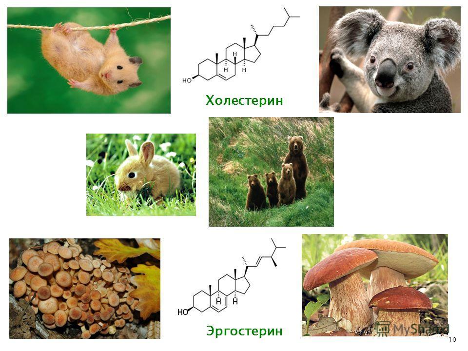 10 Холестерин Эргостерин