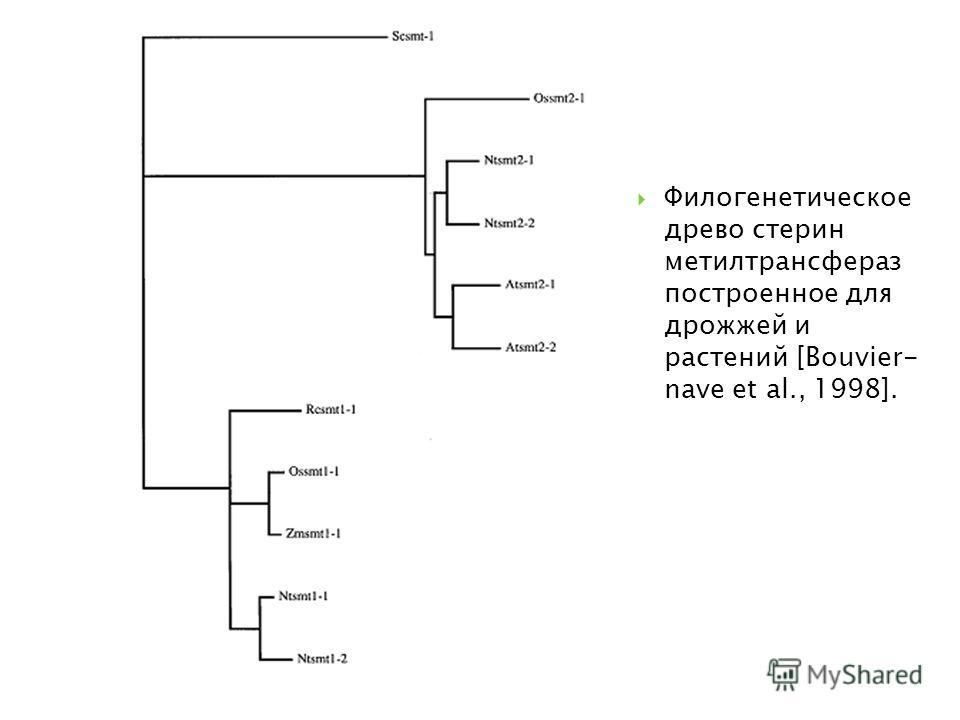 Филогенетическое древо стерин метилтрансфераз построенное для дрожжей и растений [Bouvier- nave et al., 1998].