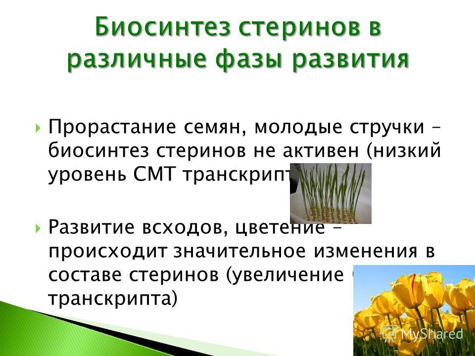 Прорастание семян, молодые стручки – биосинтез стеринов не активен (низкий уровень СМТ транскрипта) Развитие всходов, цветение – происходит значительное изменения в составе стеринов (увеличение СМТ транскрипта)