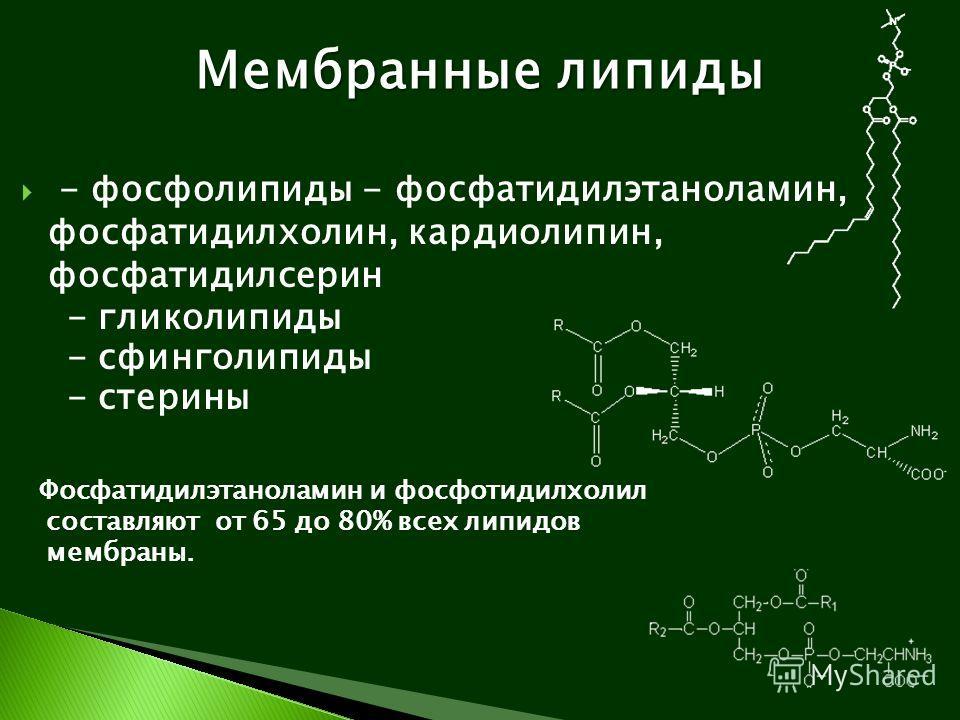 - фосфолипиды - фосфатидилэтаноламин, фосфатидилхолин, кардиолипин, фосфатидилсерин - гликолипиды - сфинголипиды - стерины Фосфатидилэтаноламин и фосфотидилхолил составляют от 65 до 80% всех липидов мембраны. Мембранные липиды