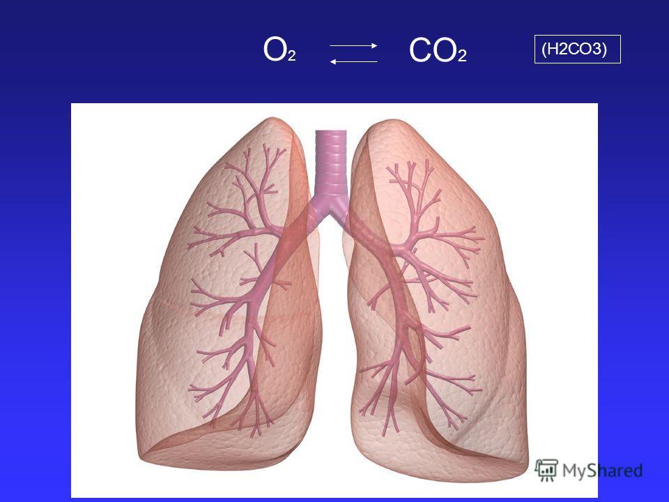 О2О2 СО 2 (Н2СО3)