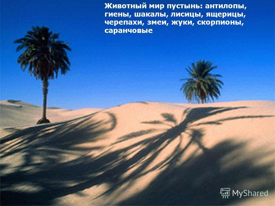 Животный мир пустынь: антилопы, гиены, шакалы, лисицы, ящерицы, черепахи, змеи, жуки, скорпионы, саранчовые