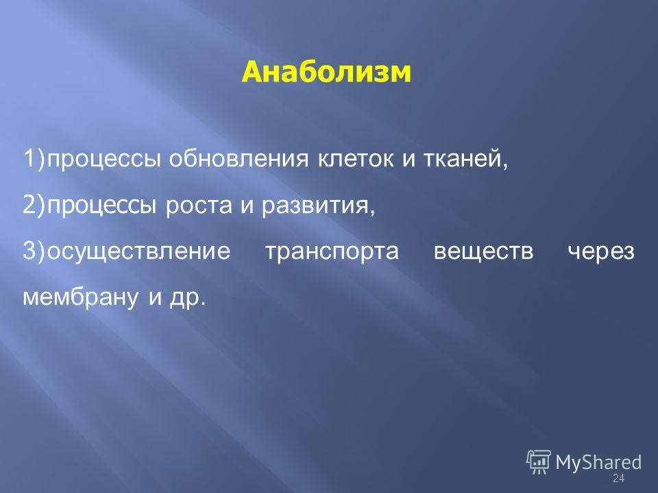 24 Анаболизм 1)процессы обновления клеток и тканей, 2)процессы роста и развития, 3)осуществление транспорта веществ через мембрану и др.