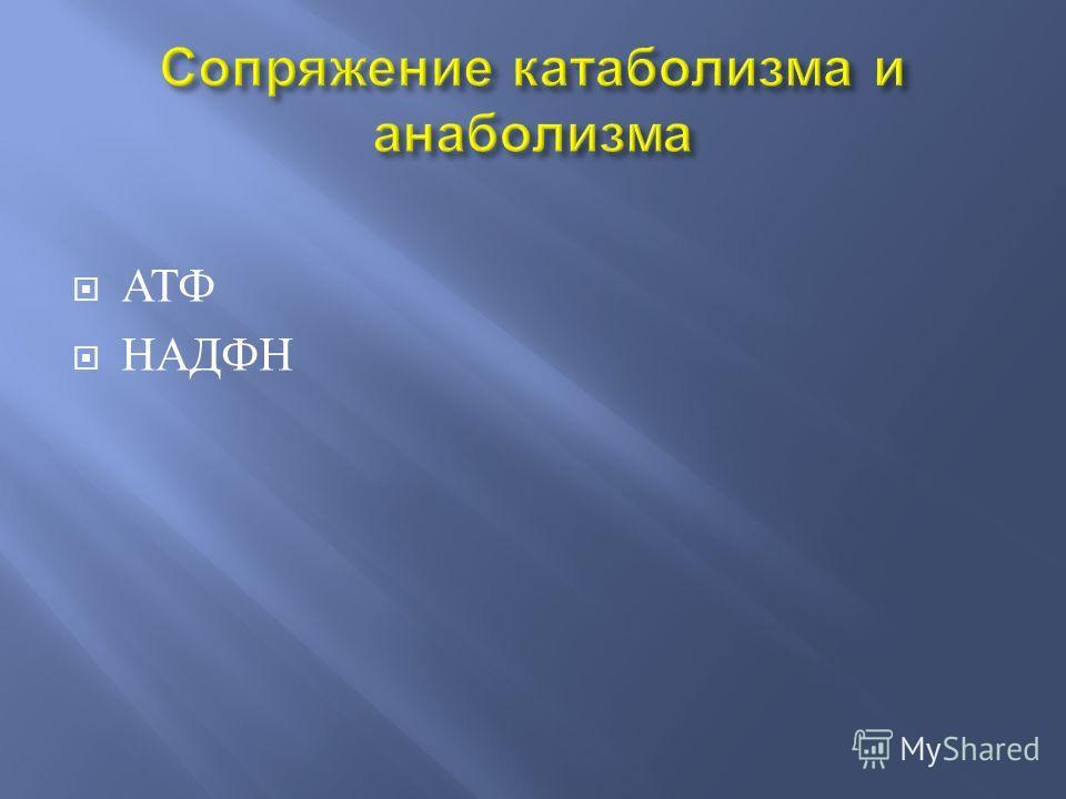 АТФ НАДФН