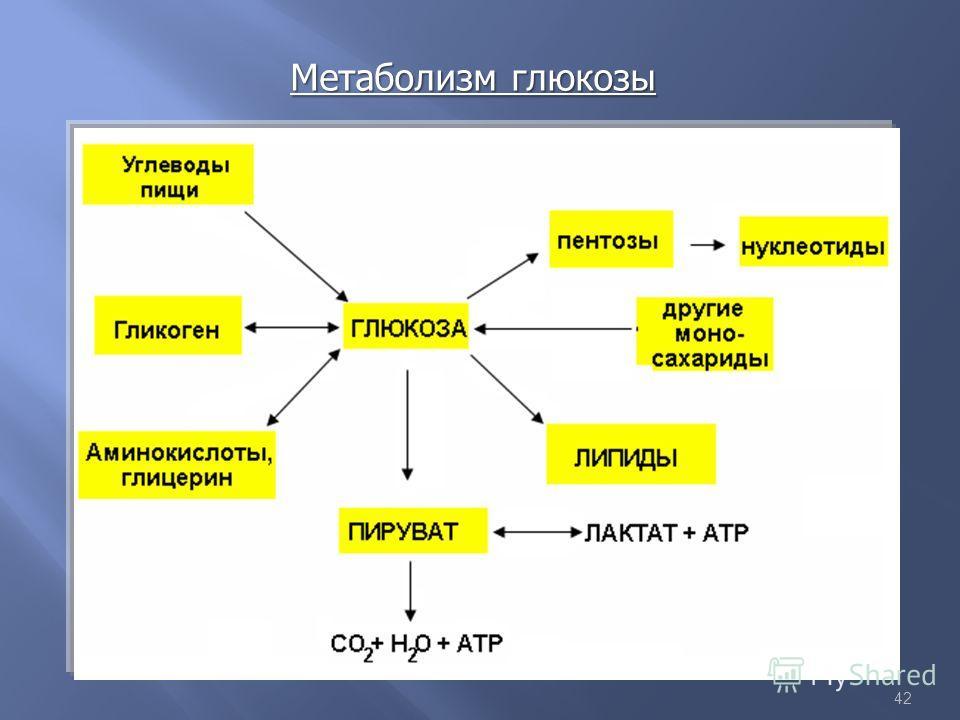 42 Метаболизм глюкозы