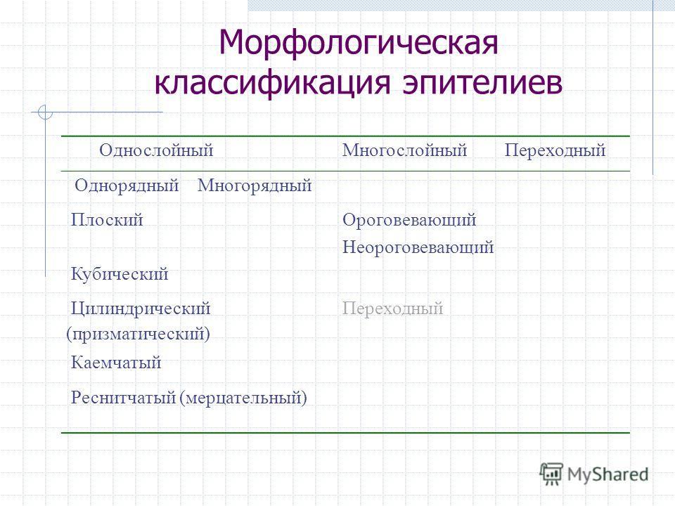Морфологическая классификация эпителиев ОднослойныйМногослойныйПереходный ОднорядныйМногорядный Плоский Ороговевающий Неороговевающий Кубический Цилиндрический (призматический) Переходный Каемчатый Реснитчатый (мерцательный)
