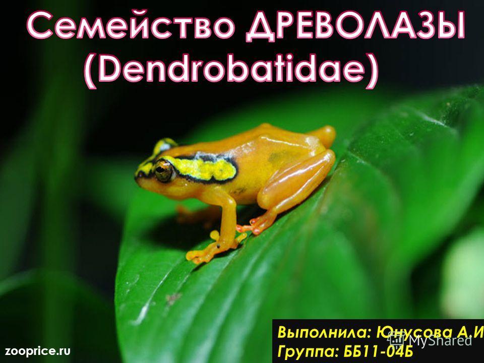 Выполнила: Юнусова А.И Группа: ББ11-04Б zooprice.ru