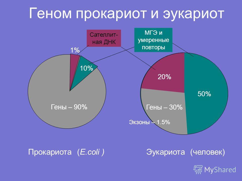 Геном прокариот и эукариот Прокариота (E.coli )Эукариота (человек) Гены – 90% 10% 1% 50% Гены – 30% 20% МГЭ и умеренные повторы Сателлит- ная ДНК Экзоны – 1.5%