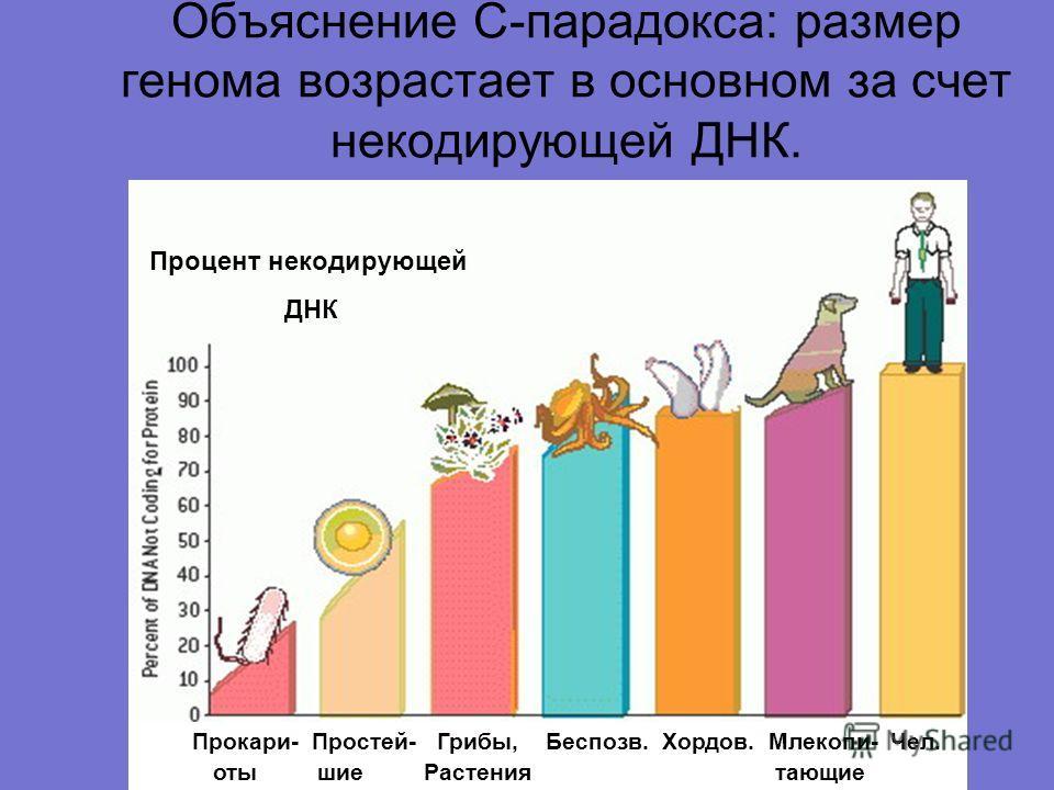 Объяснение С-парадокса: размер генома возрастает в основном за счет некодирующей ДНК. Прокари- Простей- Грибы, Беспозв. Хордов. Млекопи- Чел. оты шие Растения тающие Процент некодирующей ДНК