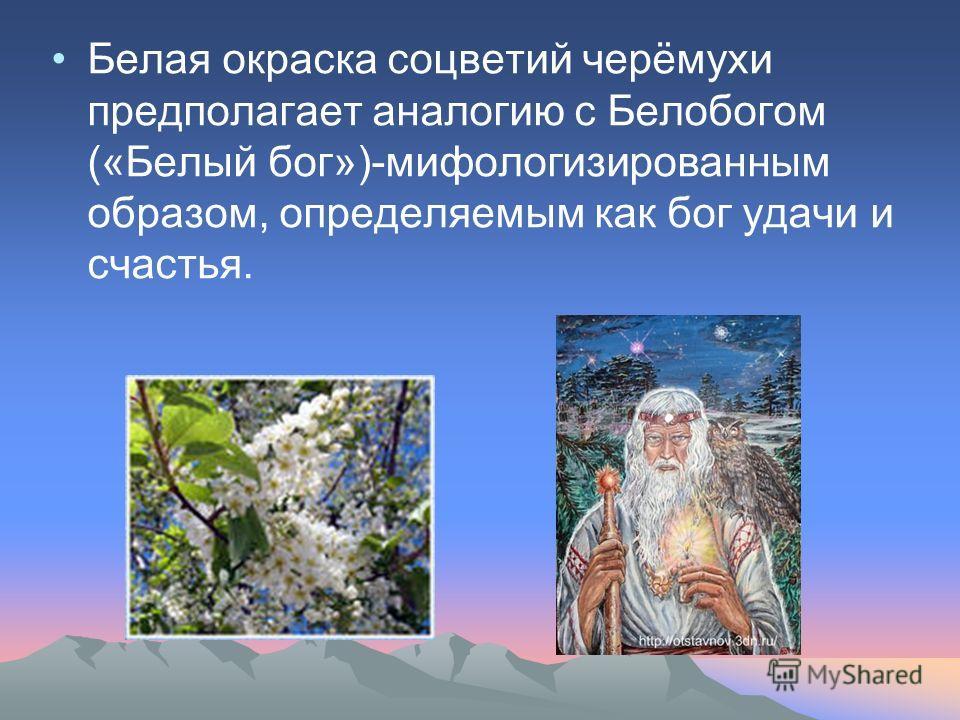 Белая окраска соцветий черёмухи предполагает аналогию с Белобогом («Белый бог»)-мифологизированным образом, определяемым как бог удачи и счастья.