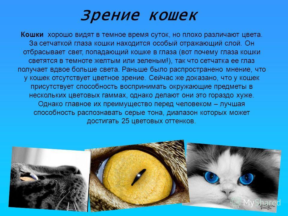 Зрение кошек Кошки хорошо видят в темное время суток, но плохо различают цвета. За сетчаткой глаза кошки находится особый отражающий слой. Он отбрасывает свет, попадающий кошке в глаза (вот почему глаза кошки светятся в темноте желтым или зеленым!),