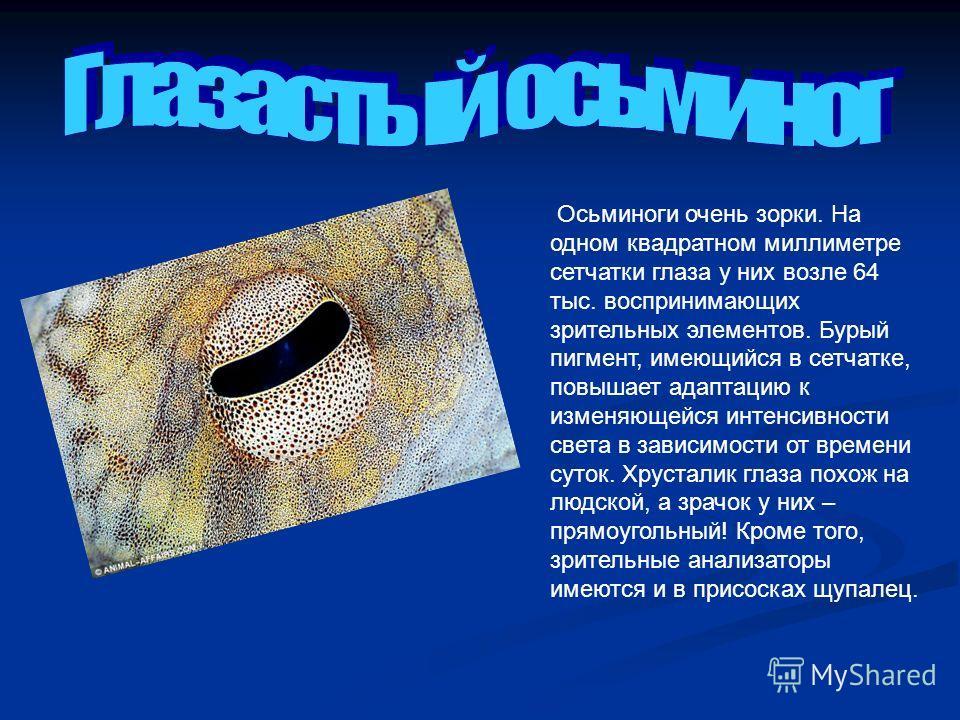 Осьминоги очень зорки. На одном квадратном миллиметре сетчатки глаза у них возле 64 тыс. воспринимающих зрительных элементов. Бурый пигмент, имеющийся в сетчатке, повышает адаптацию к изменяющейся интенсивности света в зависимости от времени суток. Х