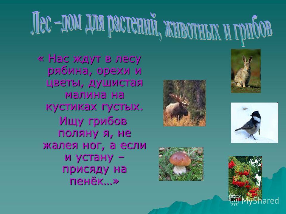 « Нас ждут в лесу рябина, орехи и цветы, душистая малина на кустиках густых. Ищу грибов поляну я, не жалея ног, а если и устану – присяду на пенёк…» Ищу грибов поляну я, не жалея ног, а если и устану – присяду на пенёк…»