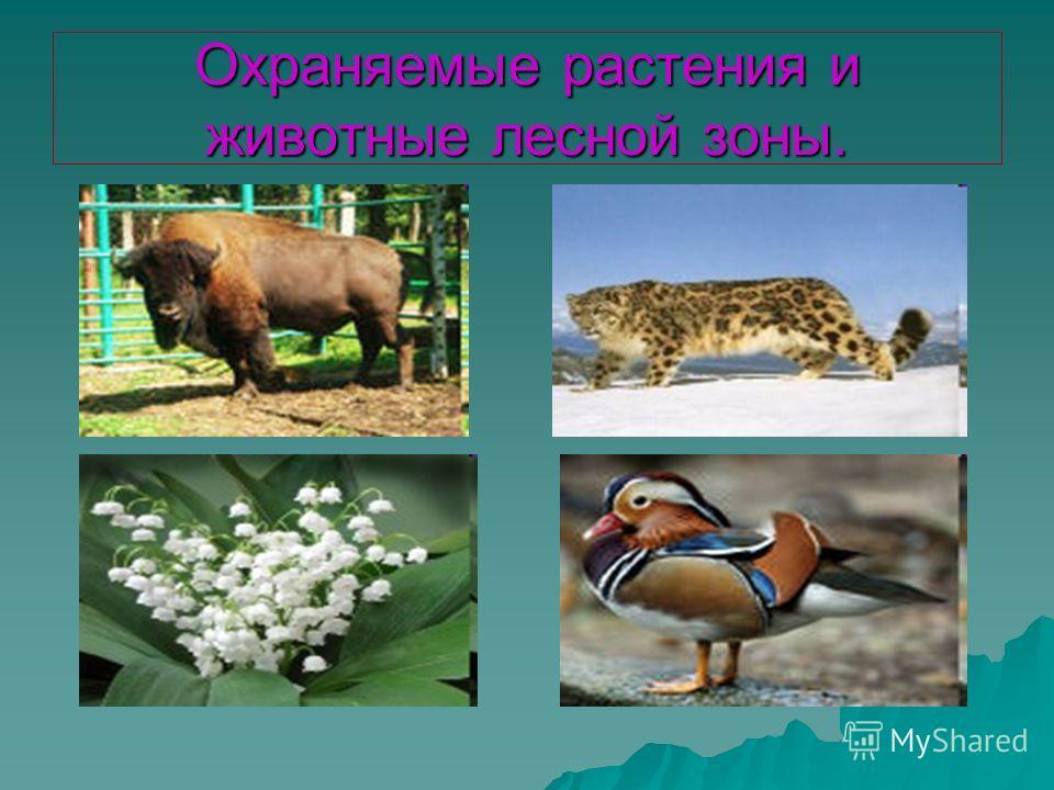 Охраняемые растения и животные лесной зоны.
