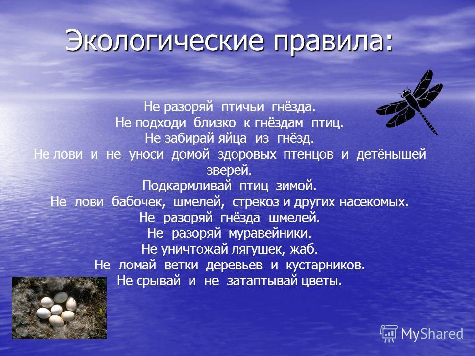 Не разоряй птичьи гнёзда. Не подходи близко к гнёздам птиц. Не забирай яйца из гнёзд. Не лови и не уноси домой здоровых птенцов и детёнышей зверей. Подкармливай птиц зимой. Не лови бабочек, шмелей, стрекоз и других насекомых. Не разоряй гнёзда шмелей