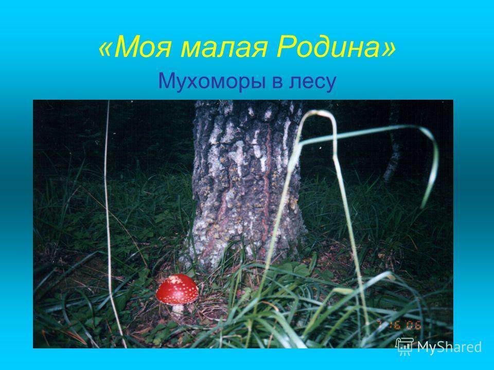 «Моя малая Родина» Мухоморы в лесу
